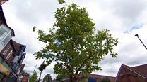 Urban tree scheme to reduce flooding risk