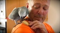 Man scales 45ft tree to rescue parrot