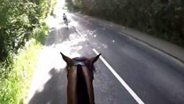 Horse hit by passing triathlon cyclists