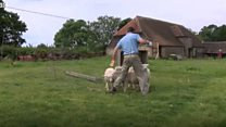Calls for action on sheep worrying