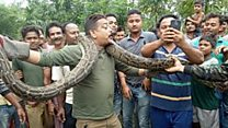 Python tries to strangle selfie taker