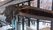 Zoology museum reopens after £4m facelift