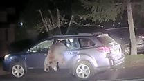 Sheriff gets into grizzly situation with bear
