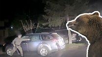 Медведь сбежал от полицейского