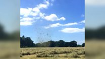 Dust devil lifts hay into the air