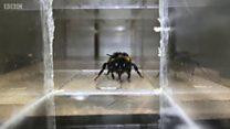 ذكاء النحل الطنان تحت الاختبار