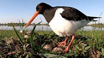 Птенцы под угрозой: орнитологи бьют тревогу из-за новых правил охоты в Беларуси