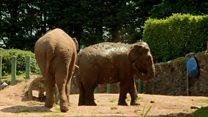 'Elephant' roams Belfast back gardens