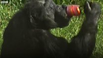 Animals enjoy lollies in the hot weather