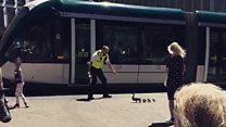 Ducks in city