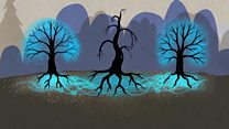 Ağaçlar gizlice birbirleriyle konuşabiliyor