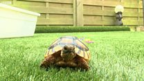 Tortoise predicts England result