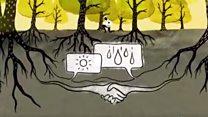 Los árboles hablan entre ellos en secreto y esto es lo que dicen