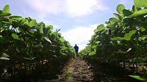 US-China trade war: A farmer's view