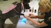 Is this Britain's most pampered pooch?