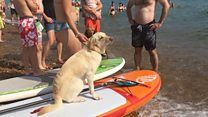 Doggy paddle world record attempt