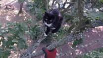 Cat rescued from tree after being stranded for three days
