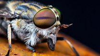 How to avoid a horsefly's bite