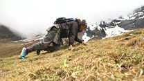 The perilous search for 'Himalayan viagra'
