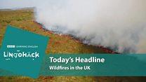 Lingohack - урок англійської про те, як горить ліс