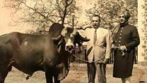 गिर गायों की नस्ल के लिए विदेश का सहारा