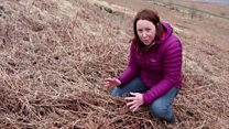 How a wildfire starts in the Welsh valleys