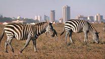 Ujenzi wa reli ya kisasa Kenya watishia wanyamapori Nairobi