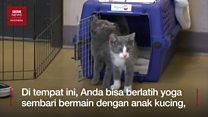 Kitten yoga: olahraga sembari menyelamatkan hewan