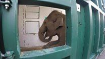 How do zoo elephants move home?