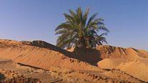 زراعة الصحراء في الإمارات