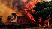 ¿Por qué los incendios forestales se esparcen tan rápido?