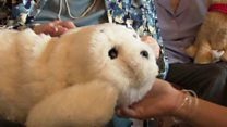 Animal robots comfort dementia patients