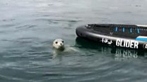 Seal pup interrupts Paddleboard lesson