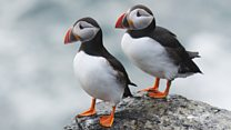 Aprende inglés: el pájaro que sorprendió a los científicos cuadruplicando su población en 30 años