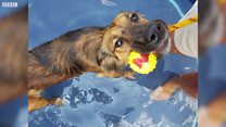 UK heatwave: Pets keep cool in the sun
