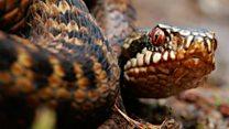 Avoiding snakes this summer