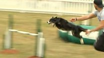 Crufts contenders compete at dog festival