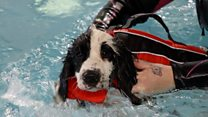 Police pups take on their first swim