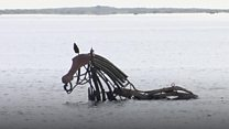 'Seahorse' created for harbour art