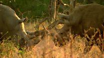 کرگدنها در افریقای جنوبی شکار فساد مالی می شوند