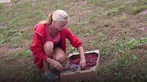 Успіх Сніткова: як фрукти годують село на Вінниччині