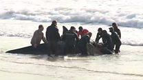 نجات دو نهنگ ِ به گل نشسته، با کمک فعالان محیط زیست و نیروی دریایی آرژانتین