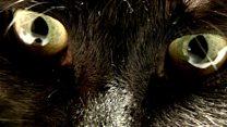 لماذا تحاول إحدى قرى نيوزيلندا حظر القطط؟