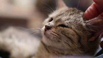 نیوزی لینڈ کا گاؤں بلّیوں پر پابندی کیوں لگانا چاہتا ہے؟
