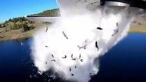 આ માછલીઓ હવામાં કેમ ઊડી રહી છે?