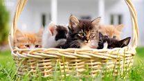 หมู่บ้านในนิวซีแลนด์เตรียมห้ามเลี้ยงแมว