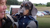 Insta-famous dogs turn out for show
