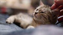Зашто село на Новом Зеланду жели да забрани мачке
