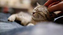 В новозеландской деревне хотят запретить всех кошек.