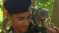 'Melhor que um cão farejador': o pequeno animal que ajuda exército a achar explosivos